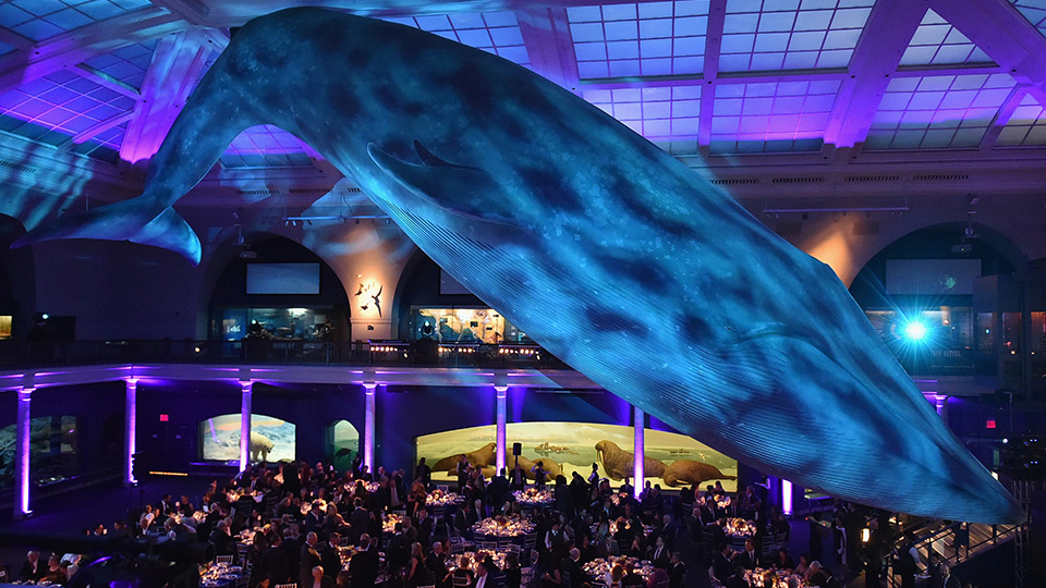 2017 Musculoskeletal Ball at the American Museum of Natural History