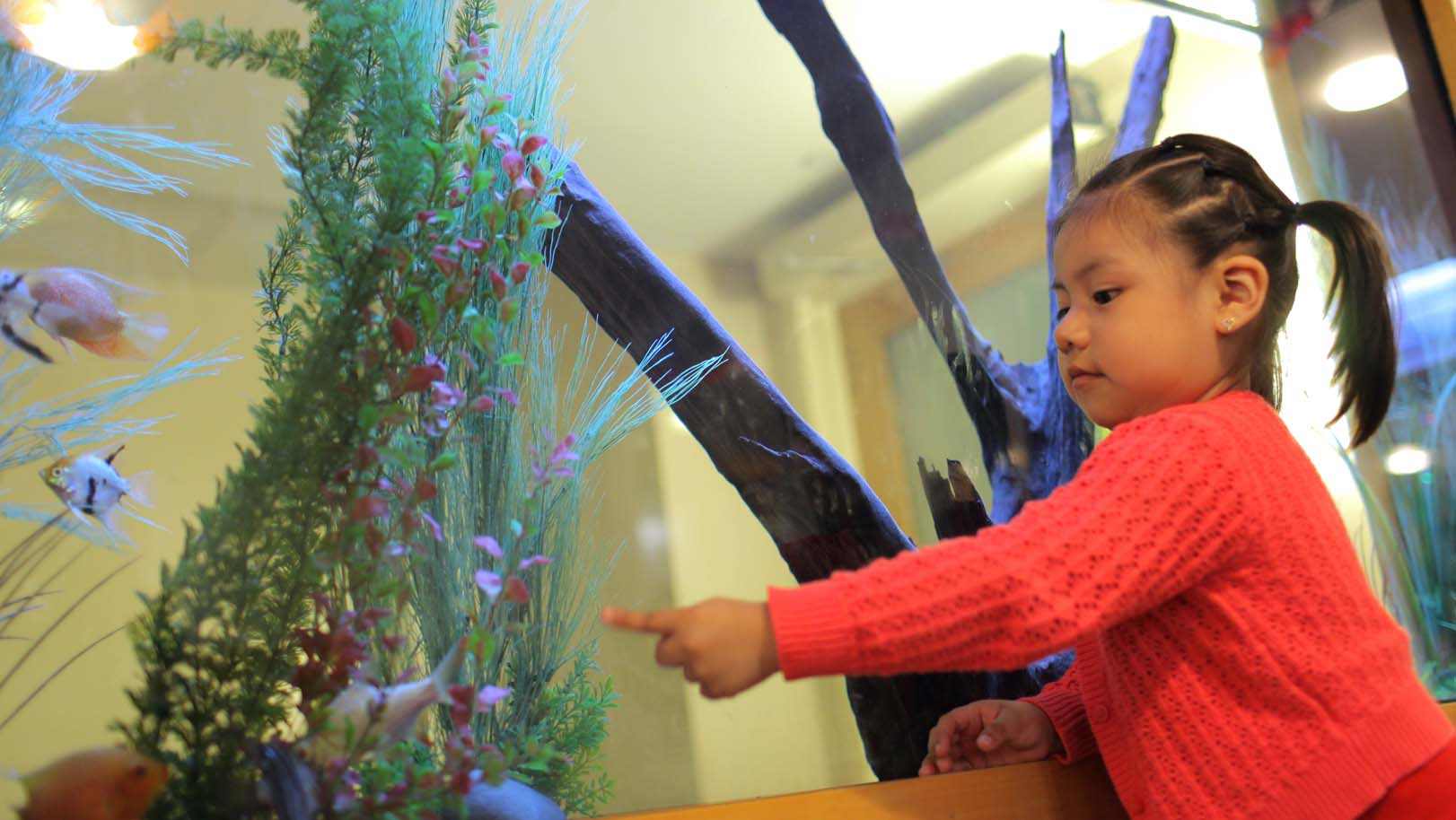 Little girl points at fish tank.