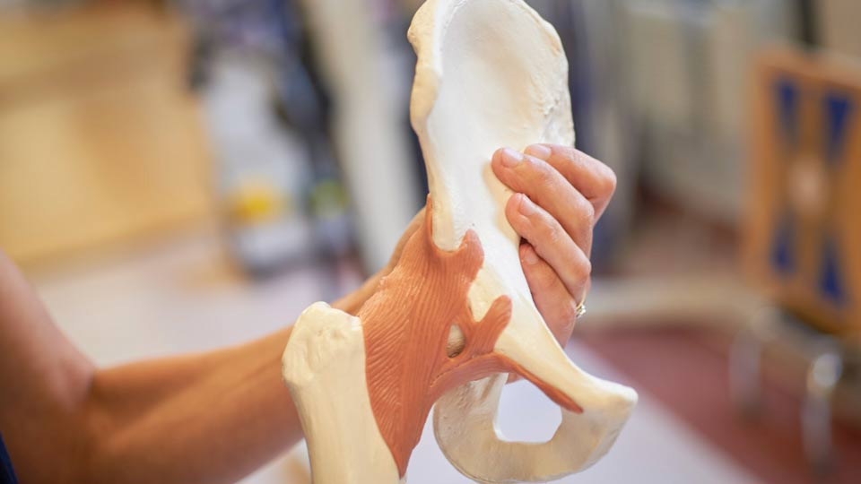 Dance Medicine Specialist Holds Model of Bone