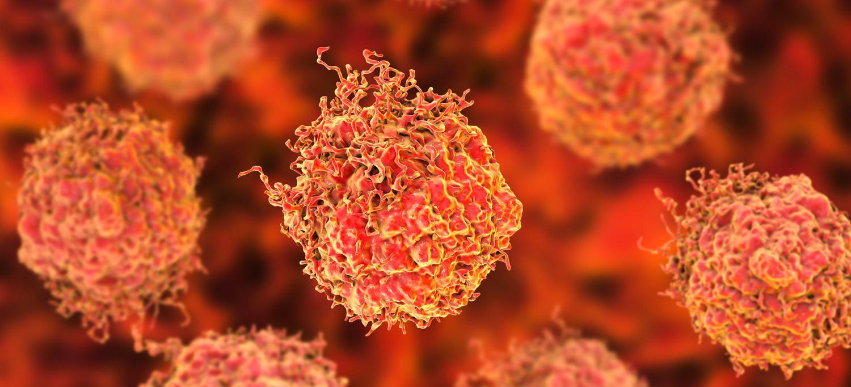 Gut Bacteria Determine Speed of Tumor Growth in Pancreatic