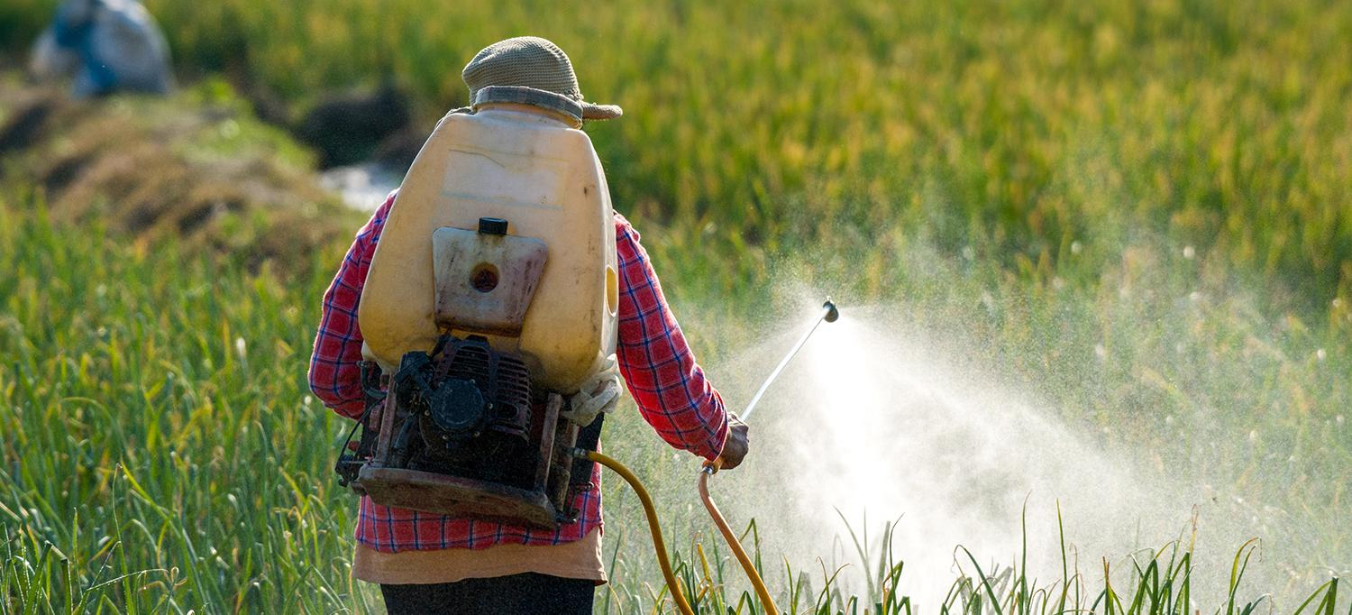 Person Spraying Field with Pesticides