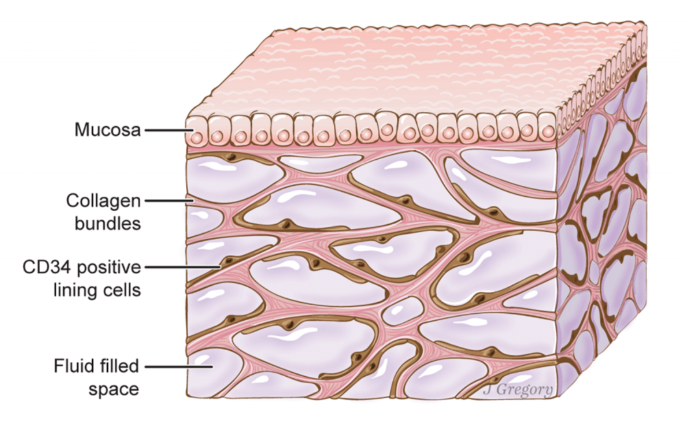 Diagram of the Interstitium.