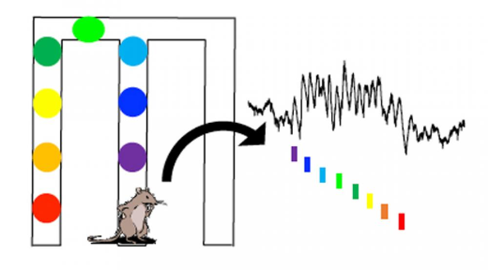 Illustration of Brain Signals in Rats